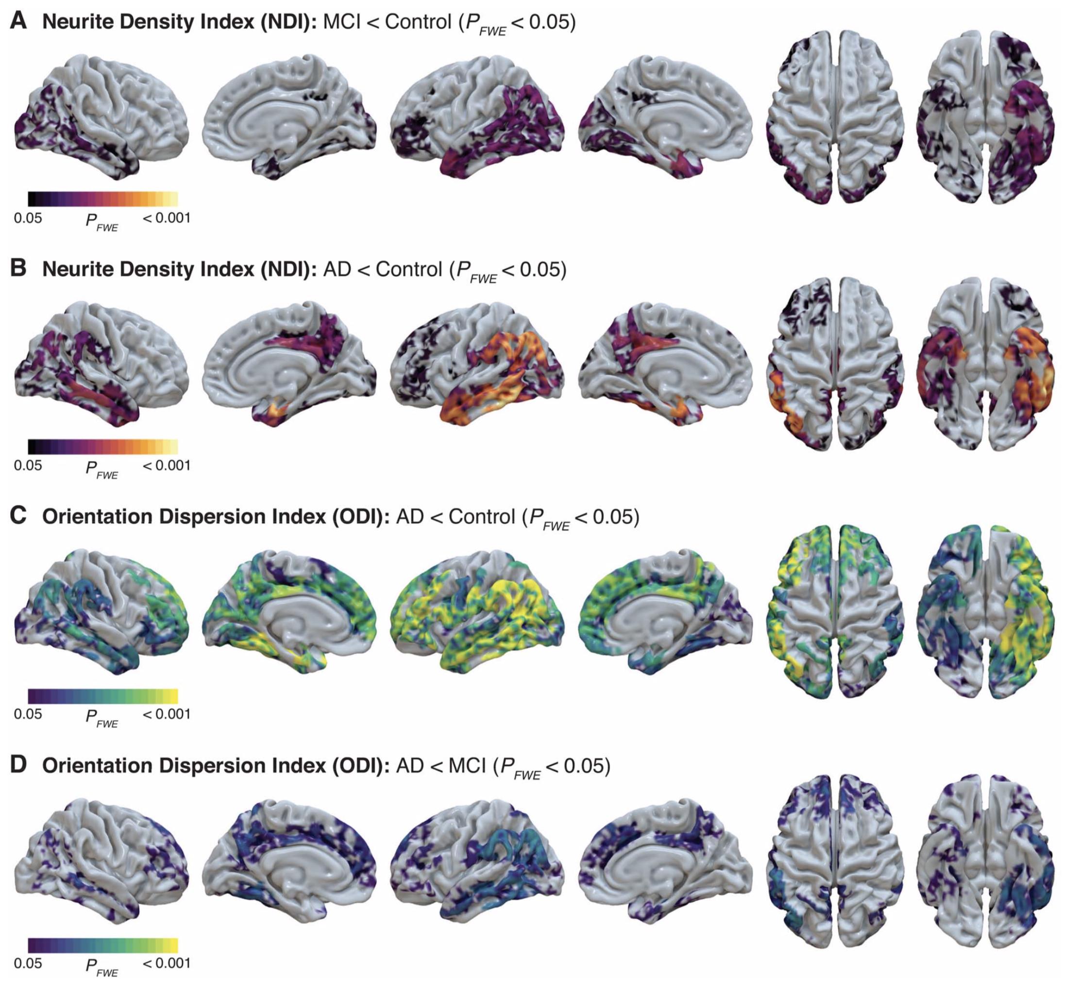 Vogt et al, 2020, Cerebral Cortex
